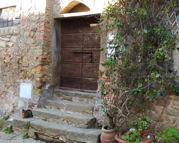 Ancient door and Tuscany cat in Pereta