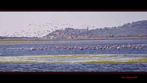 Pictures of Tuscany in autumn: flamingos in the Diaccia Botrona nature reserve Castiglione della Pescaia