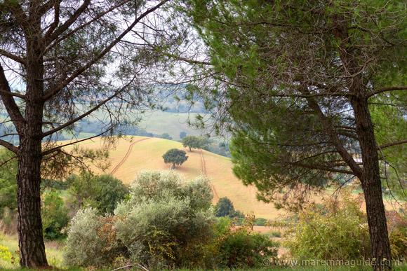 Podere Castellaccia winery in Maremma