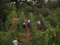 Italian vineyards: vigneti Poggio Argentiera