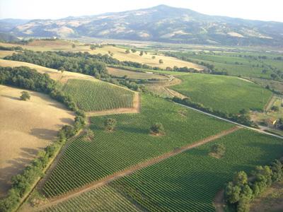 Poggio Argentiera vineyards in Maremma, Tuscany