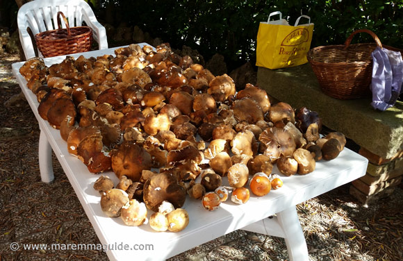 Porcini mushroom hunting in Tuscany