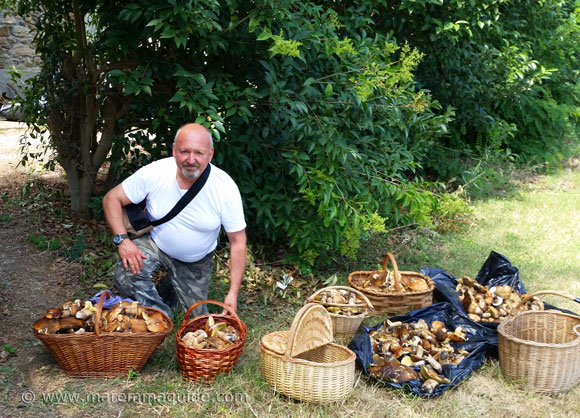 Hunting for porcini mushrooms in Tuscany Italy