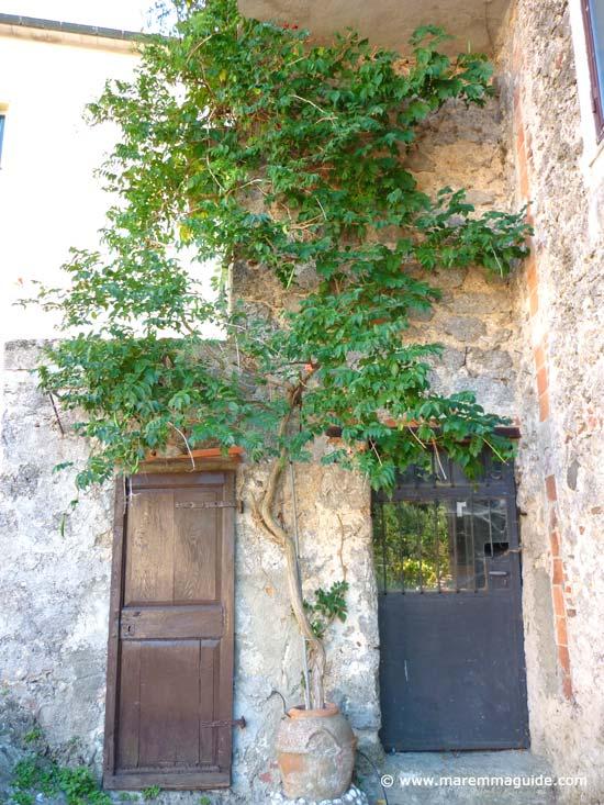 Prata in Maremma doors