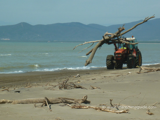 Principina a Mare beach, Grosseto in March: tractor removing the driftwood