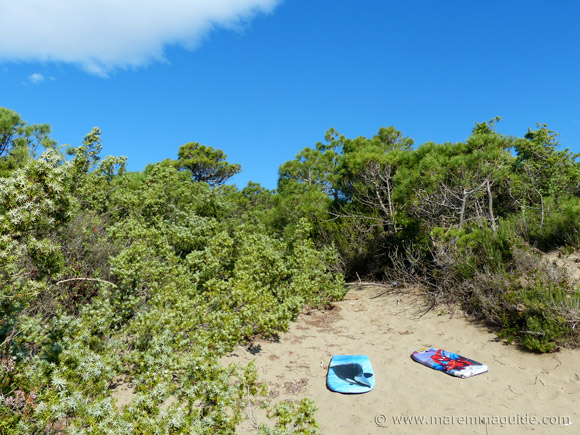 Surfboards on Riva del Sole beach dunes.