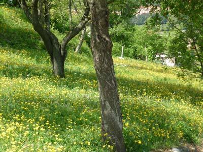 Spring flowers at La Rocca di Campiglia Marittima