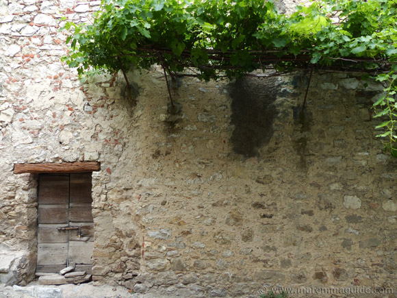Tuscany door with vines in Roccalbegna