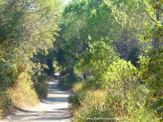 Roccamare pineta pathway