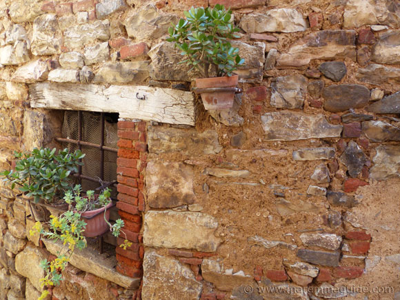 Succulent pot plant sgrowing on a Tuscany wall.