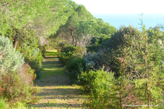 Maremma cliff footpath through Mediterranean macchia Tuscany