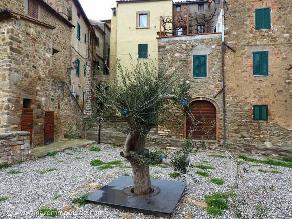 The aeroponic olive tree in Piazzetta del Cisternone Seggiano Tuscany.