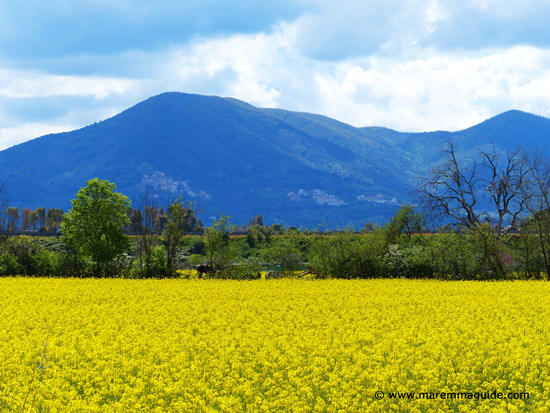 Spring flowers in Maremma Tuscany