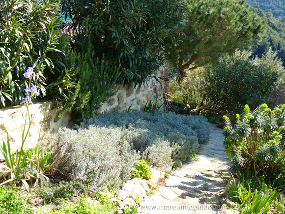 Sticciano garden path lined with aromatic herbs in Tuscany
