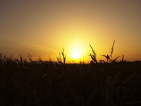Pictures of Sunrises: golden sunrise over Burano, Maremma