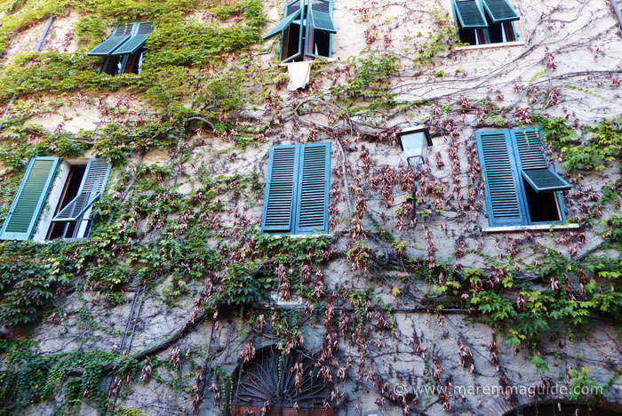 Vine covered Tuscany palazzo.
