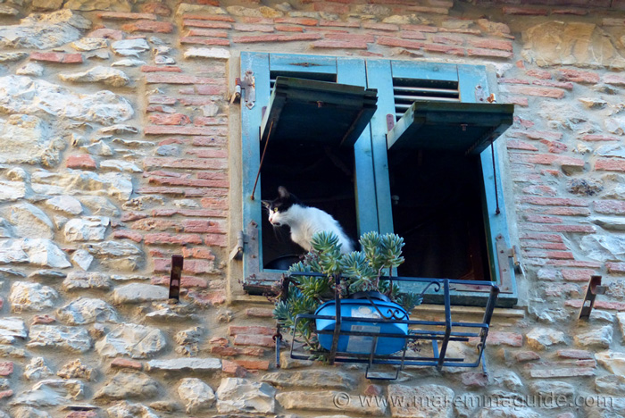 Tuscany cat watching birds out of a window in Suvereto.