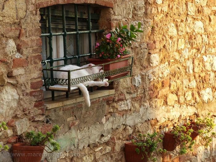 Tuscany cat sleeping in window box in Suvereto Italy.