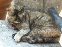 Tuscany cat dozing in Tatti Maremma Tuscany Italy