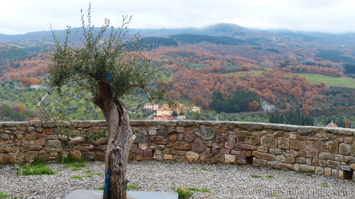 Seggiano's olive tree and its view of Monte Amiata.