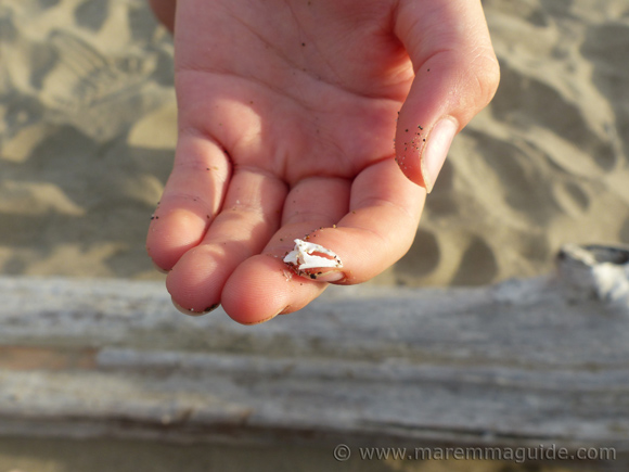 Tiny beach treasures in Maremma Tuscany