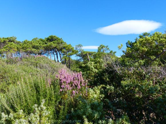 Fixed dune environment of the Tombolo da Castiglione della Pescaia Tuscany