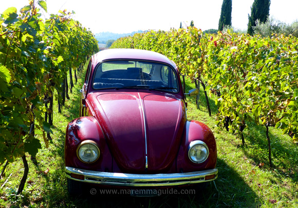 Tuscan vineyards in Maremma with an old red VW Beetle car
