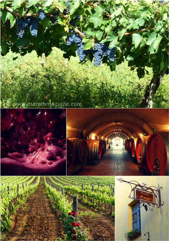 Tuscany day and half day wine tours in Maremma Italy