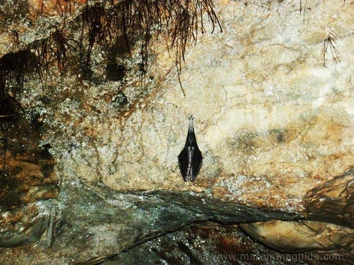 bats in Tuscany Italy.