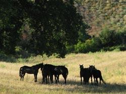 Tuscany farm holiday horse: Le Murelle Country Resort, Manciano Maremma Italy