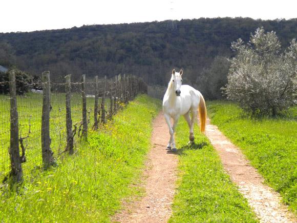Tuscany farmhouse with horses