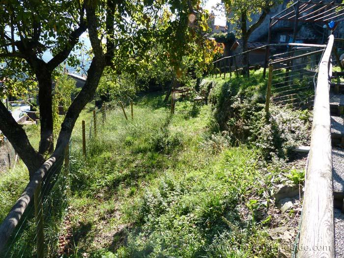 Terrace garden.