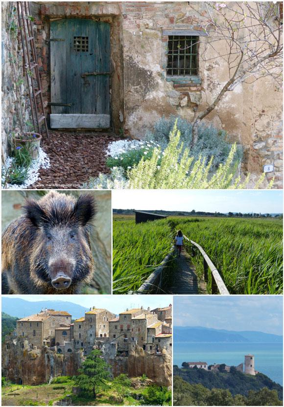 Rural  Tuscany: Maremma Italy