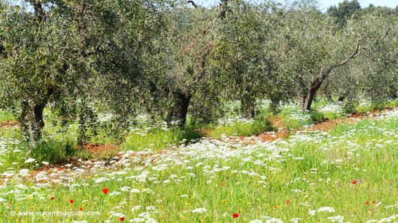 Maremma in spring Tuscany Italt