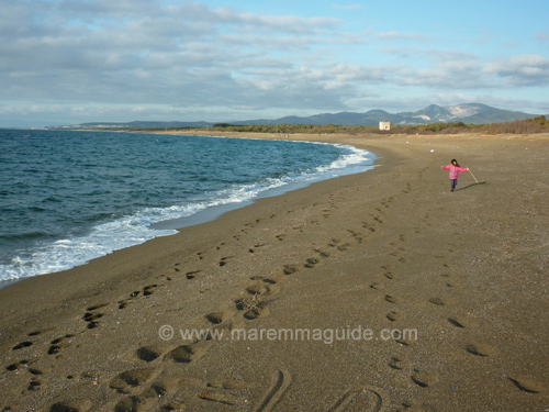 Tuscany picture: Torraccia beach Maremma in February