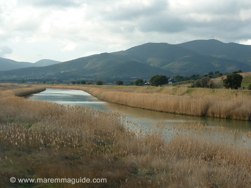 Tuscany picture: February in Maremma at the Diaccia Botrone