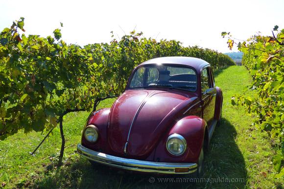 Tuscany vineyards in Maremma in October