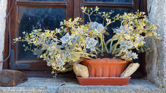 Flowers in a Tuscany windowsill