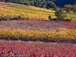 Tuscany wineries Maremma Italy
