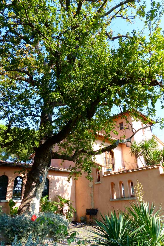 Tuscany winery accommodation in Maremma Italy