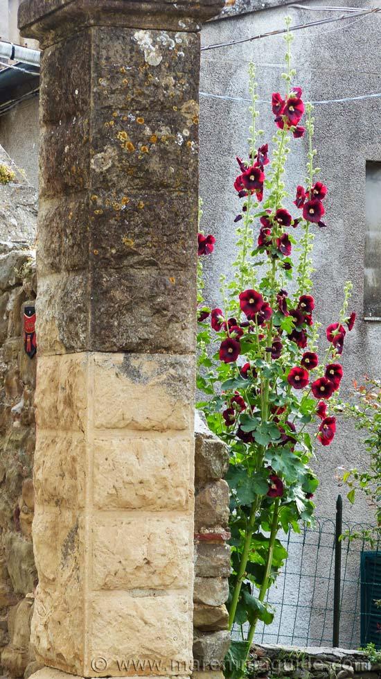 Summer flowers in Vetulonia Italy