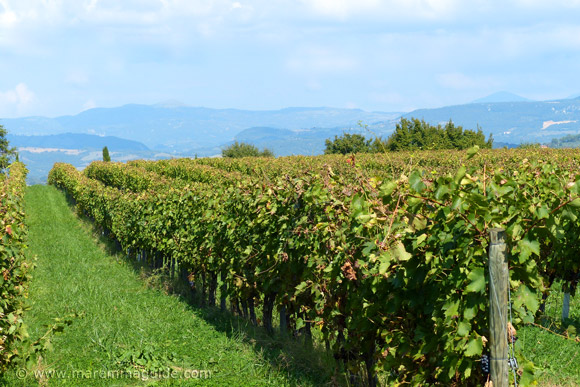Vineyards in Maremma Tuscany Italy: Morellino di Scansano