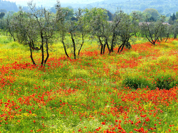 Best time to see flowers in Tuscany