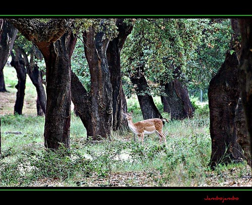 Wildlife in Italy in Maremma, Tuscany and Lazio