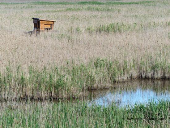 WWF Orti - Bottagone Regional Reserve, Tuscany
