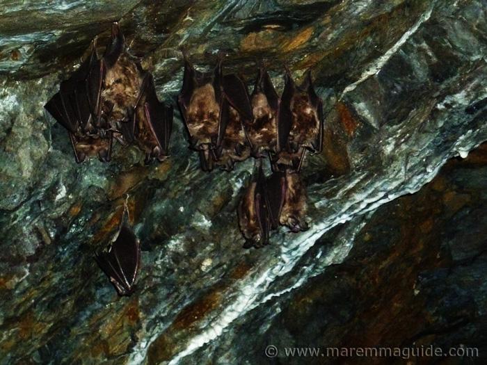Bats in Tuscany Italy