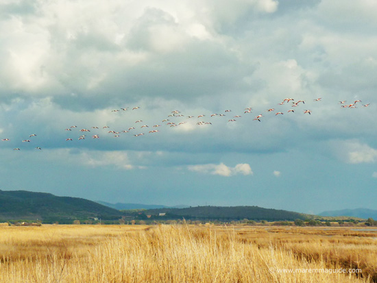 Birdwatching in Maremma Tuscany Italy