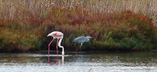 Birdwatching in Laguna di Orbetello Maremma Tuscany