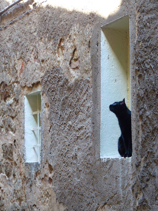 Black Tuscany cat in Roccastrada Maremma