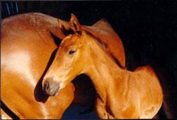 a Tuscany farm holiday horse: Borgognano Farm House in Maremma